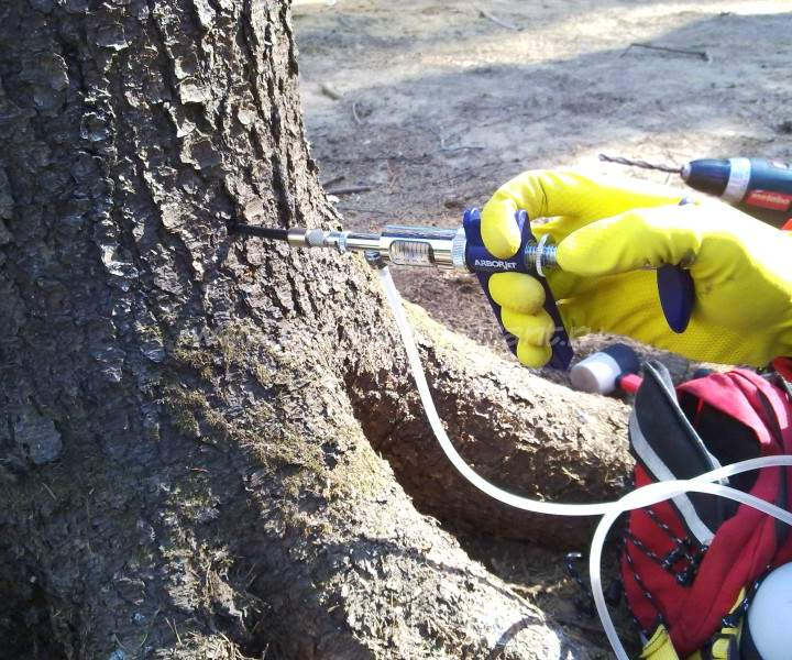 Как спасти дерево от короеда