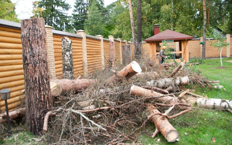 Спил аварийных деревьев на участке