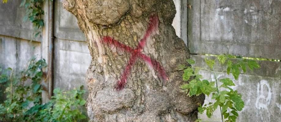 Признать дерево аварийным