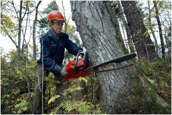 Спилить дерево в лесу для собственных нужд